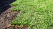 Устройство газона или как обрадовать уставший глаз городского жителя