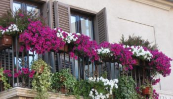 Как оформить балкон — оформление балкона цветами