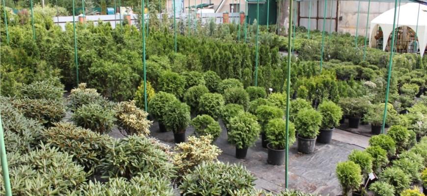 экозелень полоцк
