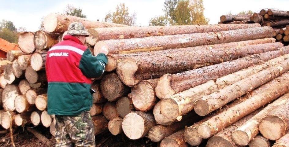 Проверка качества лесоматериала, пиломатериала